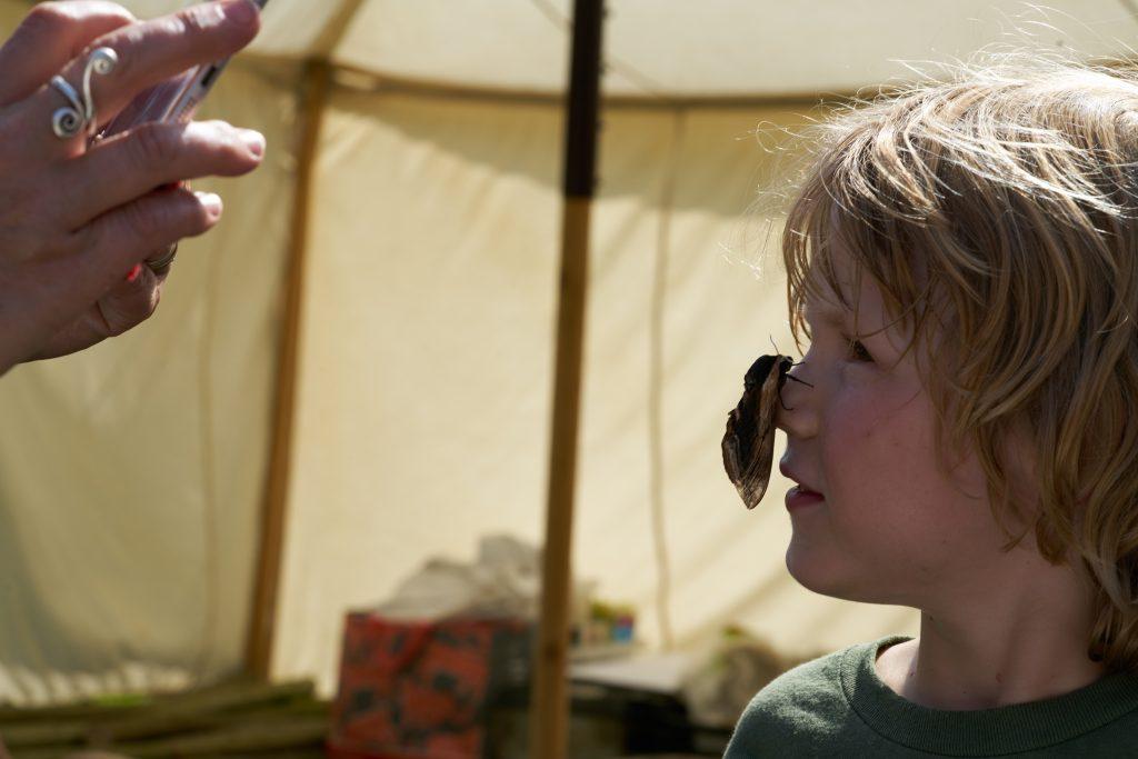 moth at the secret wildlife festival