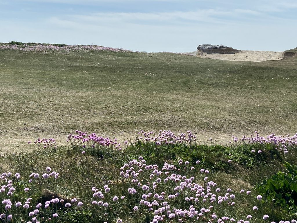 Wild flowers over Seaford Head East Sussex