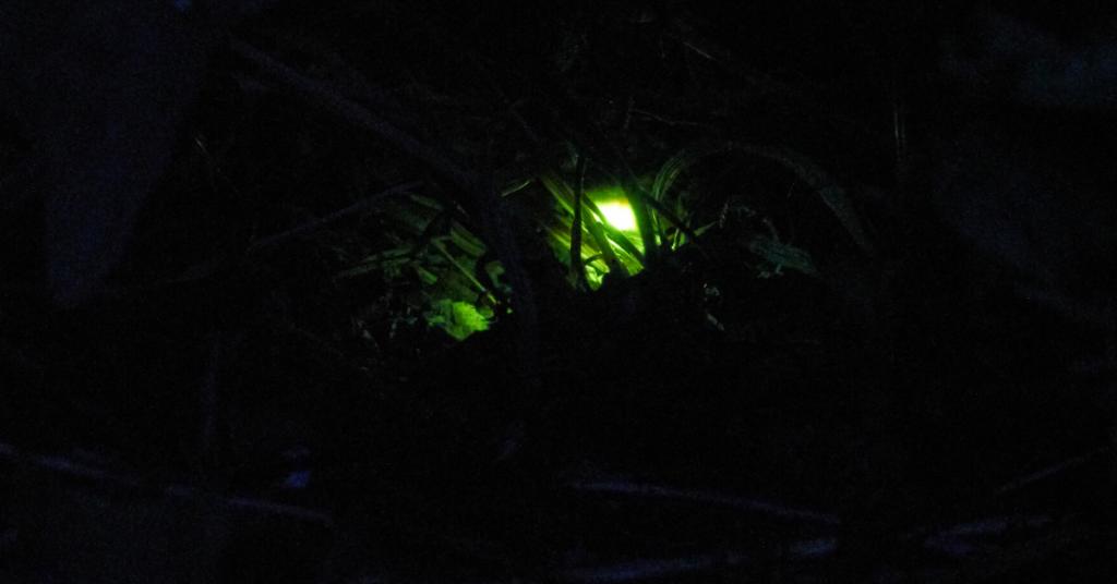 Glow worm at The Secret Campsite Max Mudie
